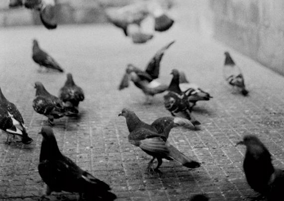 © Arnaud Griggio